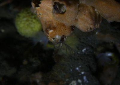 Hrúðurkarl krabbadýr