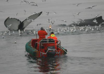 Andanefjumerkingar á Eyjafirði 4,10 2008 004